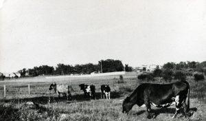 Ekensbergs hage. Den låg vid dagens brandstationstomt och sträckte ut sig i omgivningarna innan bebyggelsen tog fart i mitten av 1950-talet.
